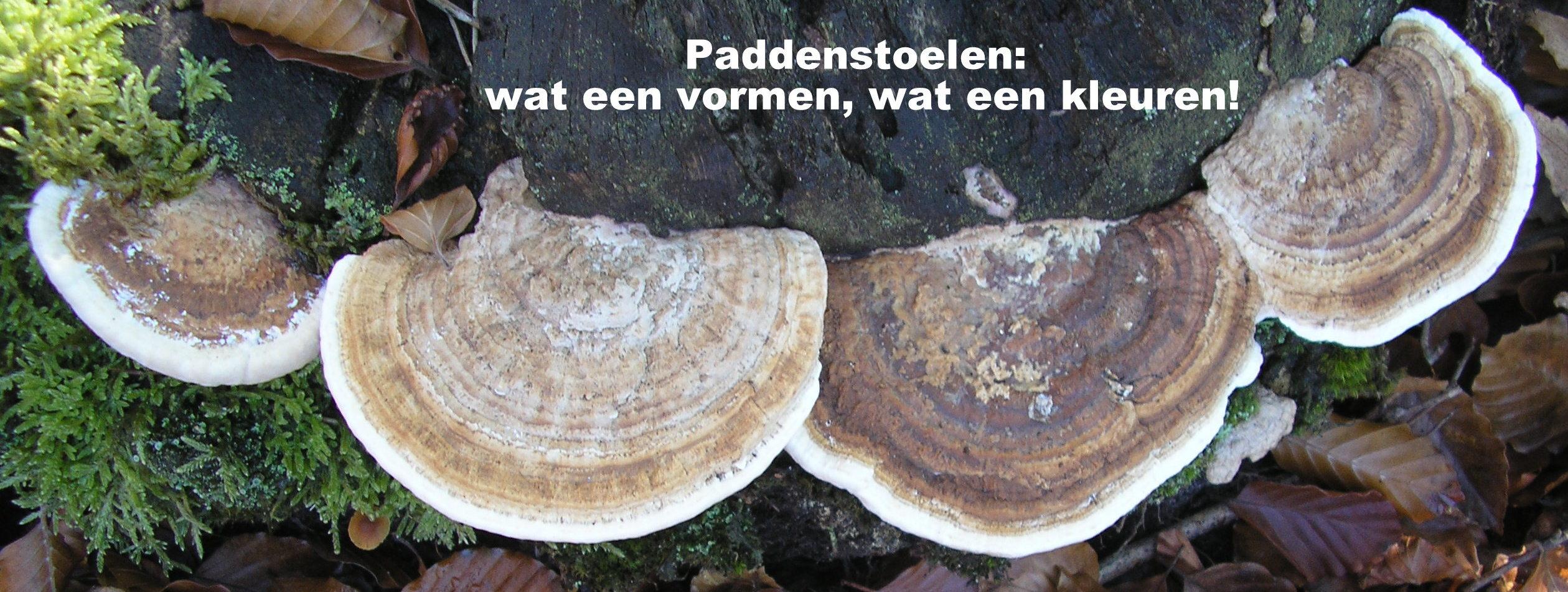 Renske Cramer Creatief: paddenstoelen, wat een vormen, wat een kleuren!