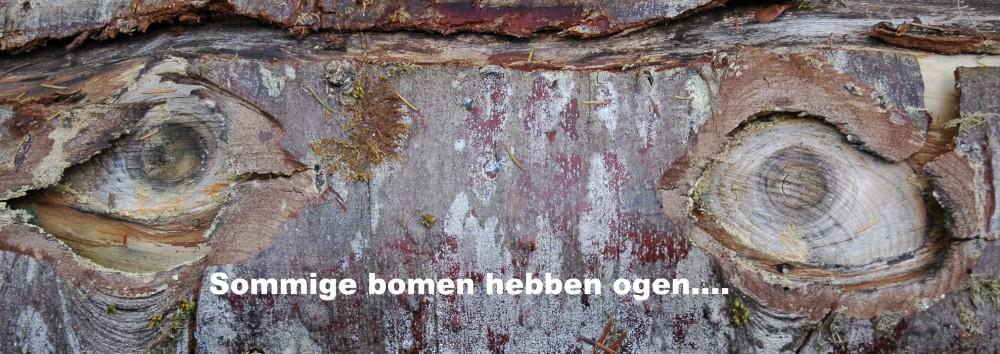 Kunst van moeder natuur Renske Cramers foto De ogen van een boom