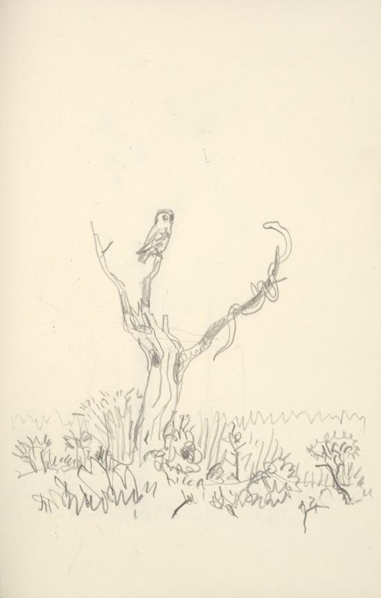 Arie Schippers tekening Uil en slang.