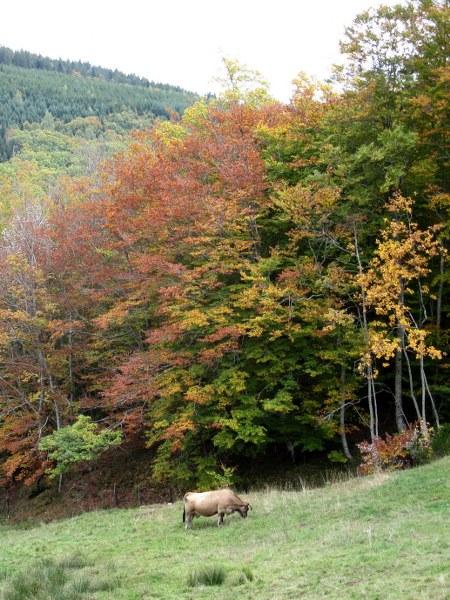Renske Cramers foto van een landschap in de Aveyron (Frankrijk).