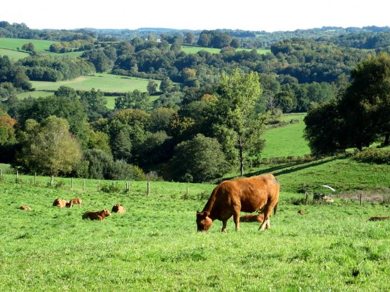 Renske Cramers foto van een landschap in de Limousin (Frankrijk).