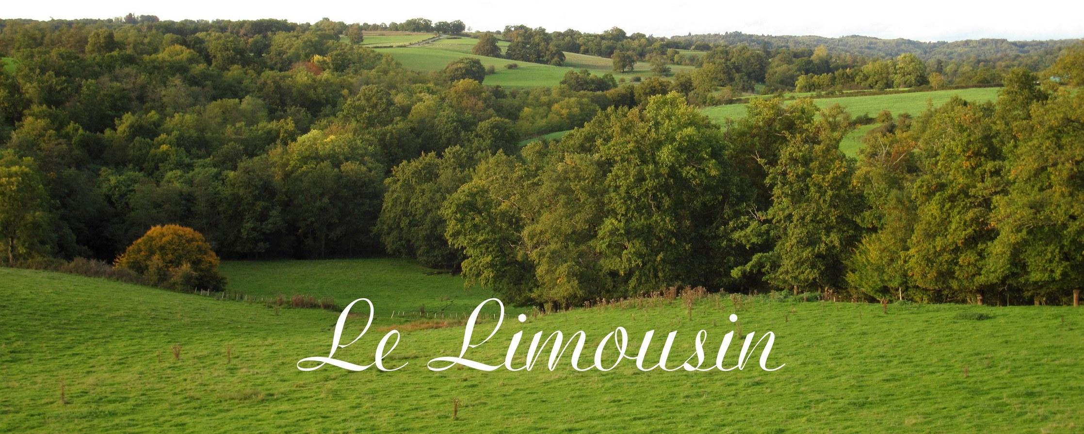 Foto van de Limousin op de site Renske Cramer Creatief