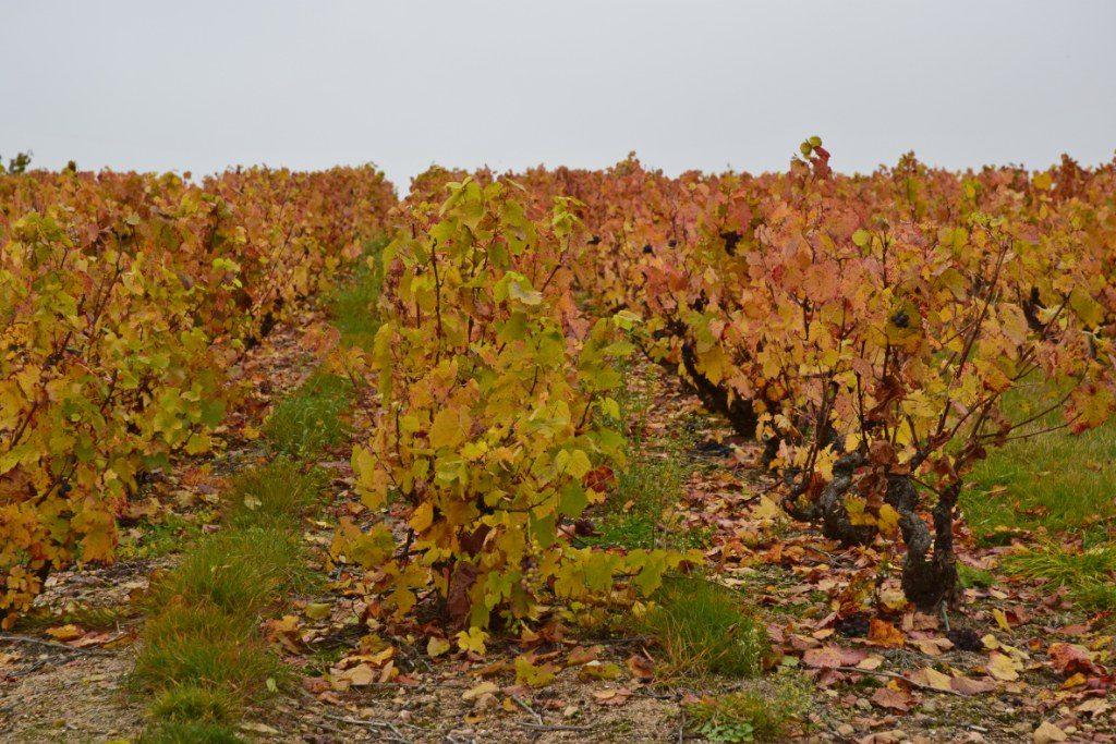 Renske Cramer Creatief foto van landschap in de Beaujolais, Frankrijk