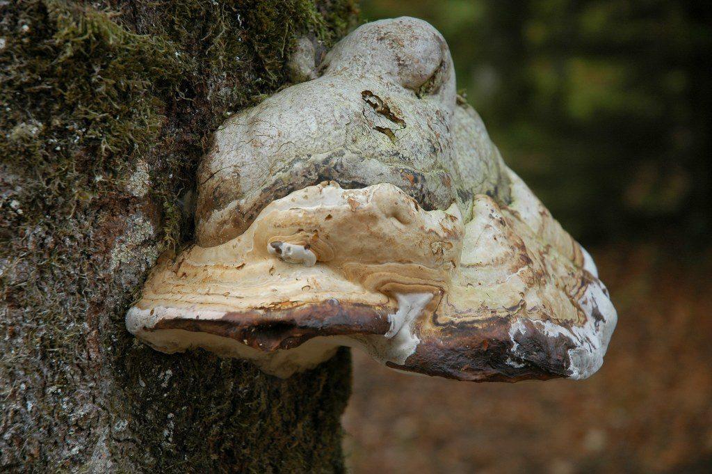 Renske Cramers foto van een paddenstoel op Renske Cramer Creatief.nl