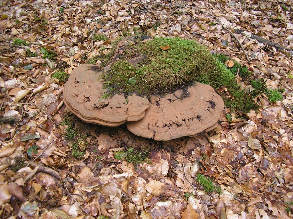Renske Cramers foto van paddenstoelen op Renske Cramer Creatief.nl