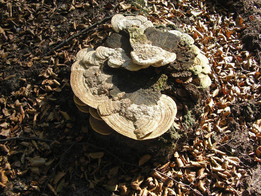 Renske Cramers foto van paddenstoelenop Renske Cramer Creatief.nl