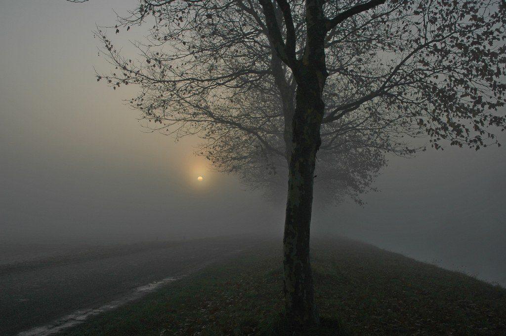 Renske Cramer Creatief sectie foto's van landschappen Renskes foto van een mistig landschap met opkomende zon