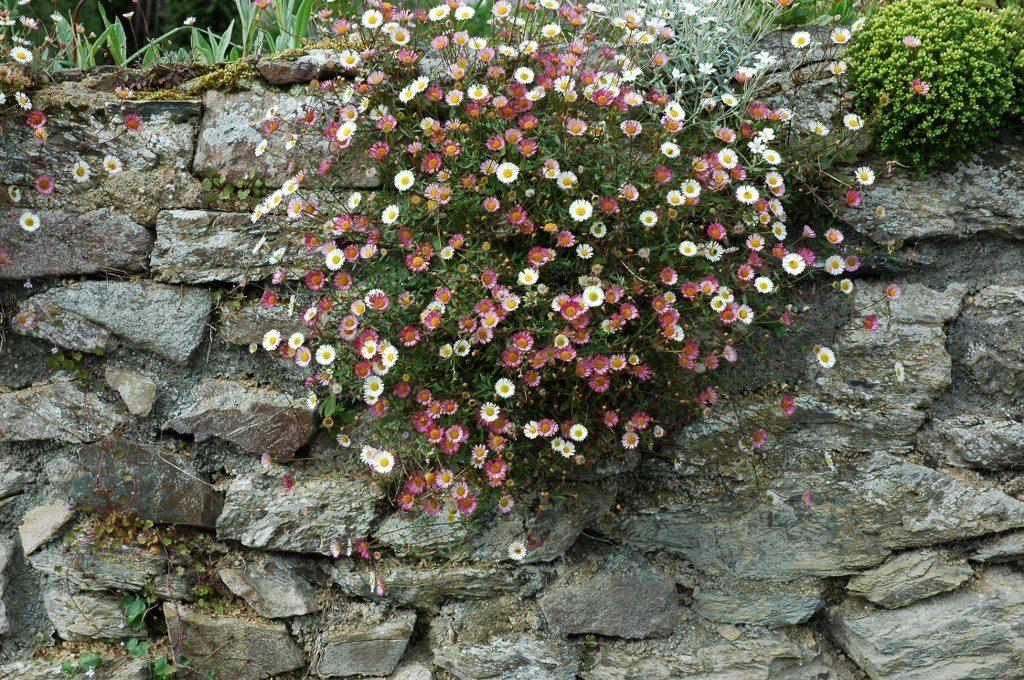 Renske Cramer Creatief reizen Frankrijk Bretagne foto van een oude muur in het binnenland