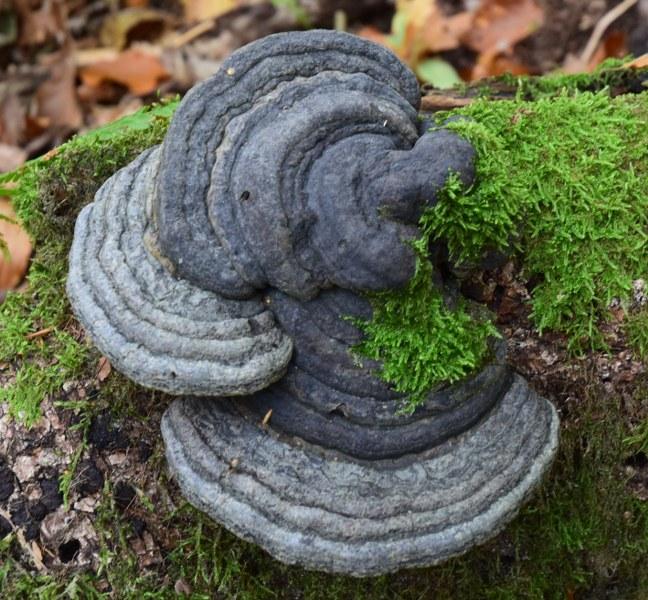 Renske Cramer Creatief paddenstoelengroeisel in grijstinten