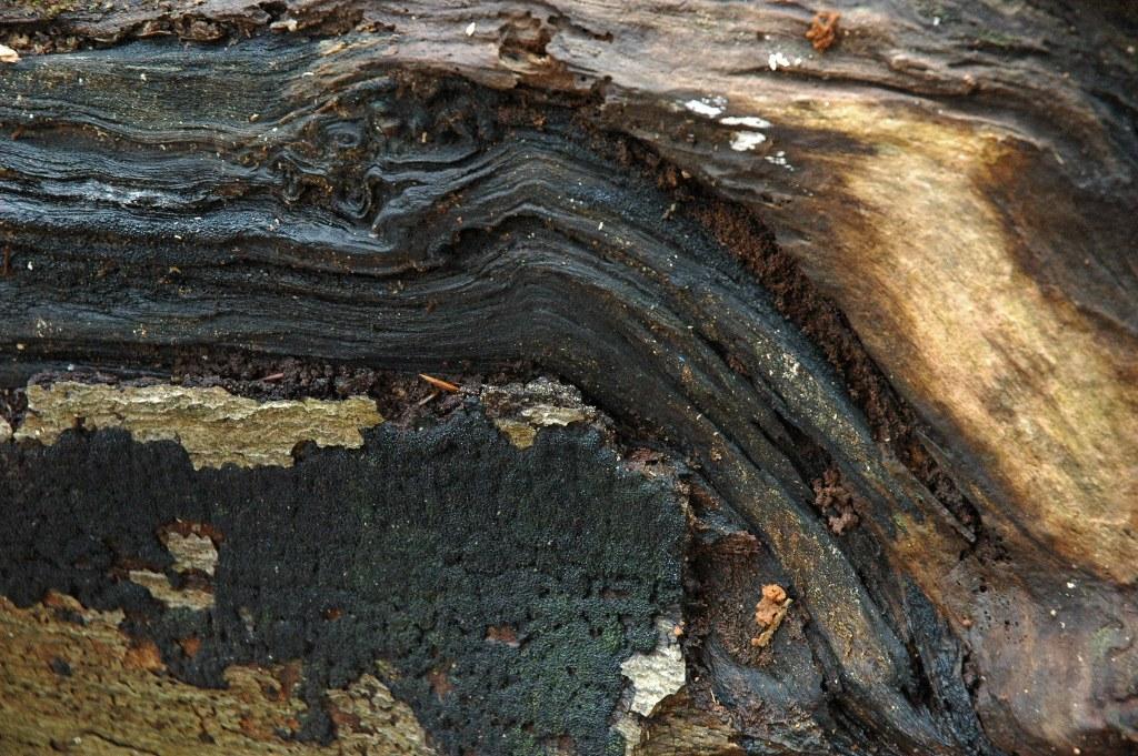 Renske Cramer Creatief: voorbeeld van kunst van moeder natuur. Een fraai patroon op een omgevallen boom..
